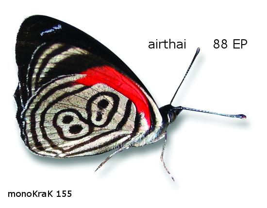 monoKraK 155 cover