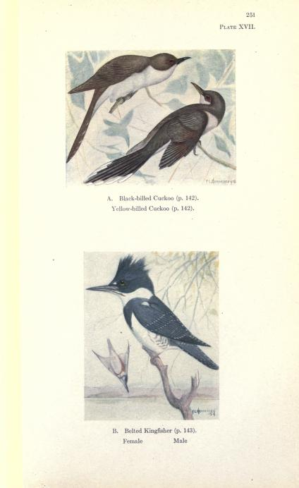 two images, color illustrations; top is of black billed and yellow billed cuckoo perched on small twigs with foliage; bottom is of kingfishers, male perched on branch, female diving into water